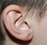 ear_lrg
