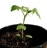 growth5_sq