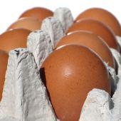 carton-egg2_sq