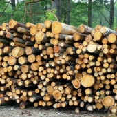 forestry-forest-timber-wood_sq