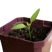 growth-seedling_sq