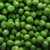 peas2_sq
