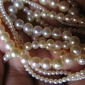 jewellery-necklace-pearl