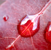 blood_vein_170sq