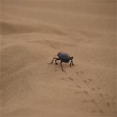 sand_desert_170sq