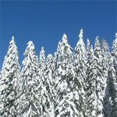 nordic_snow_170sq