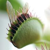 venus flytrap security