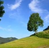 summer-landscape-1446043-m