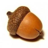 acorn-94554-m
