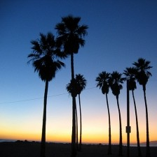 sunset-in-venice-beach-1345669-m