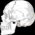 skull-31060_1280
