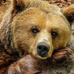 bear-838688_960_720